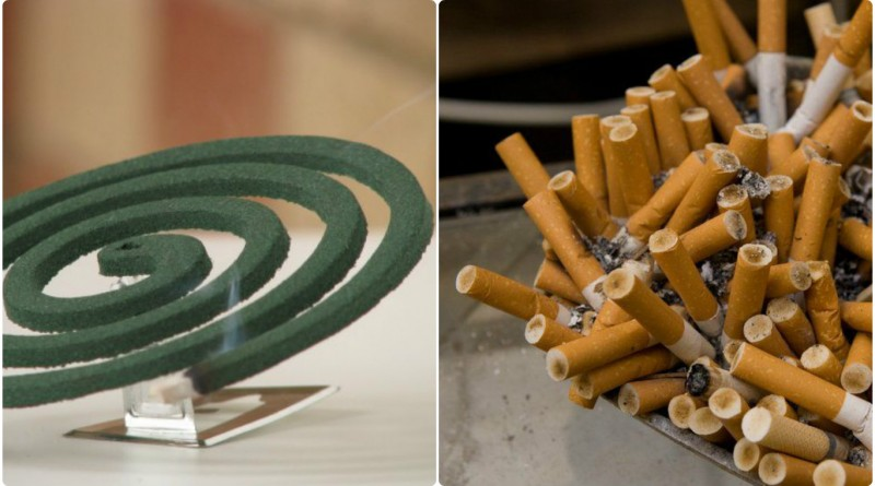 one-mosquito-coil-equals-100-cigarettes-says-expert