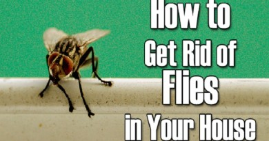 Remedies-to-Get-Rid-of-Flies-meditoall