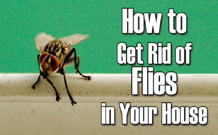 Natural Treatments to Get Rid of Flies